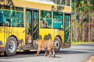 Mua Vé Safari Phú Quốc chỉ bằng 70% giá gốc TẠI ĐÂY